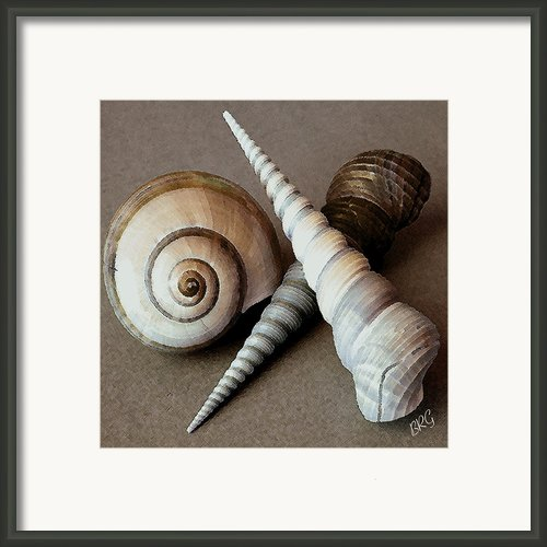 Seashells Spectacular No 24 Framed Print By Ben And Raisa Gertsberg