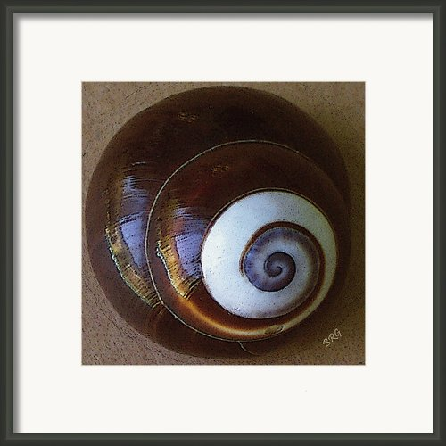 Seashells Spectacular No 26 Framed Print By Ben And Raisa Gertsberg
