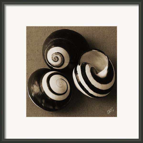 Seashells Spectacular No 27 Framed Print By Ben And Raisa Gertsberg
