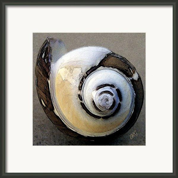 Seashells Spectacular No 3 Framed Print By Ben And Raisa Gertsberg