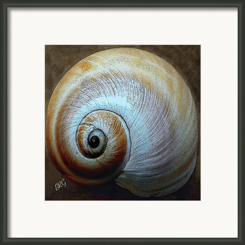 Seashells Spectacular No 36 Framed Print By Ben And Raisa Gertsberg