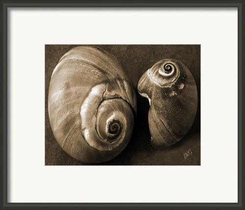 Seashells Spectacular No 6 Framed Print By Ben And Raisa Gertsberg
