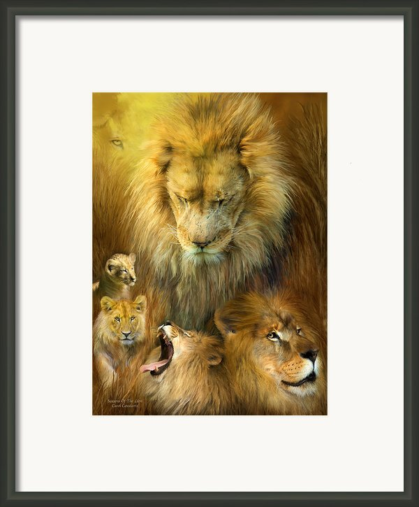 Seasons Of The Lion Framed Print By Carol Cavalaris