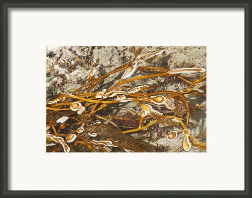 Seaweed Swirls Framed Print By Author And Photographer Laura Wrede