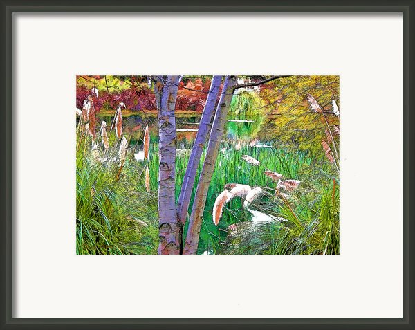 Secluded Pond Framed Print By Chuck Staley
