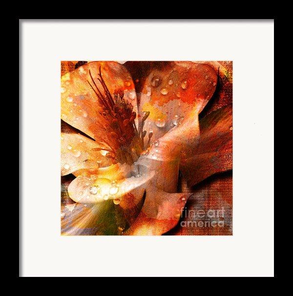 Seeds Ii Framed Print By Yanni Theodorou