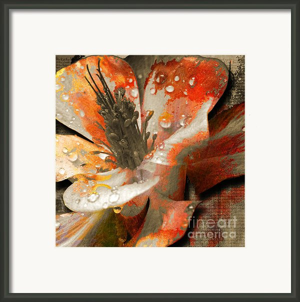 Seeds Framed Print By Yanni Theodorou