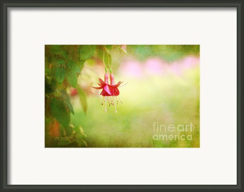 Seeking The Light Framed Print By Reflective Moments  Photography And Digital Art Images