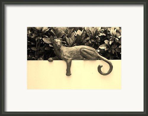 Sepia Cat Framed Print By Rob Hans
