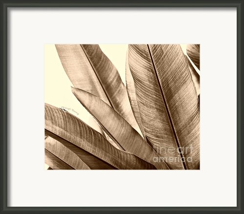 Sepia Leaves Framed Print By Cheryl Young