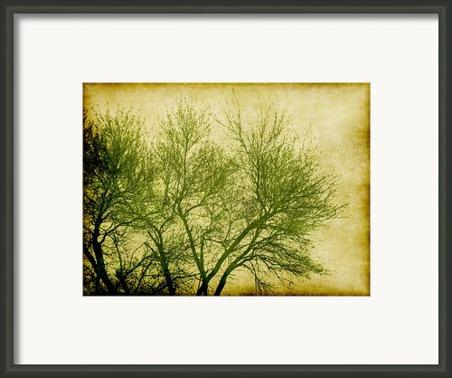 Serene Green 2 Framed Print By Wendy J St Christopher