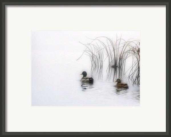 Serene Moments Framed Print By Karol  Livote