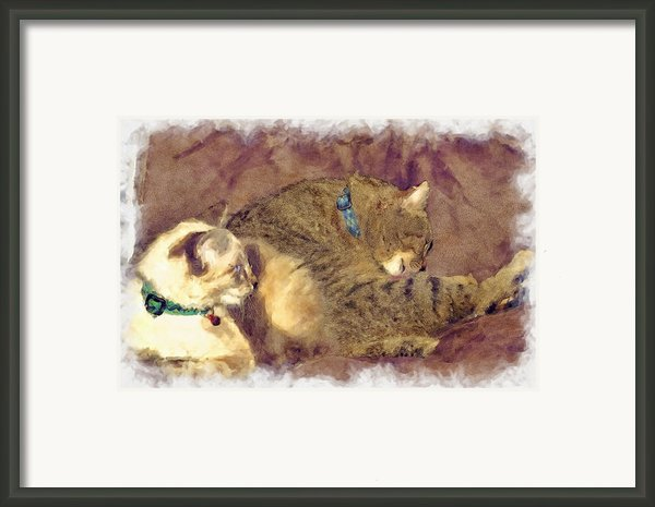 Settling Down Framed Print By Susan Leggett