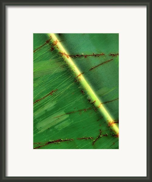 Shades Of Green Framed Print By Tom Druin