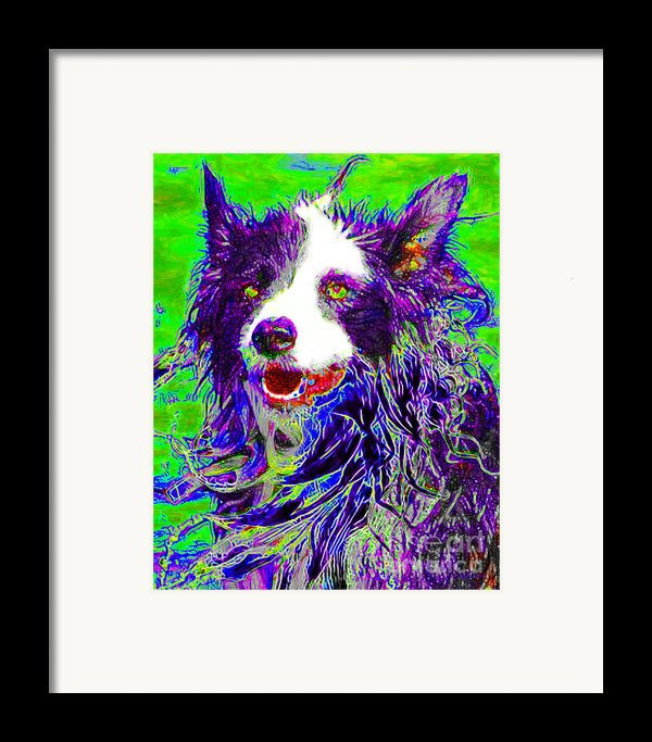 Sheep Dog 20130125v4 Framed Print By Wingsdomain Art And Photography