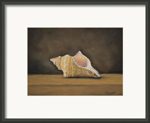 Shell Framed Print By Joanne Grant