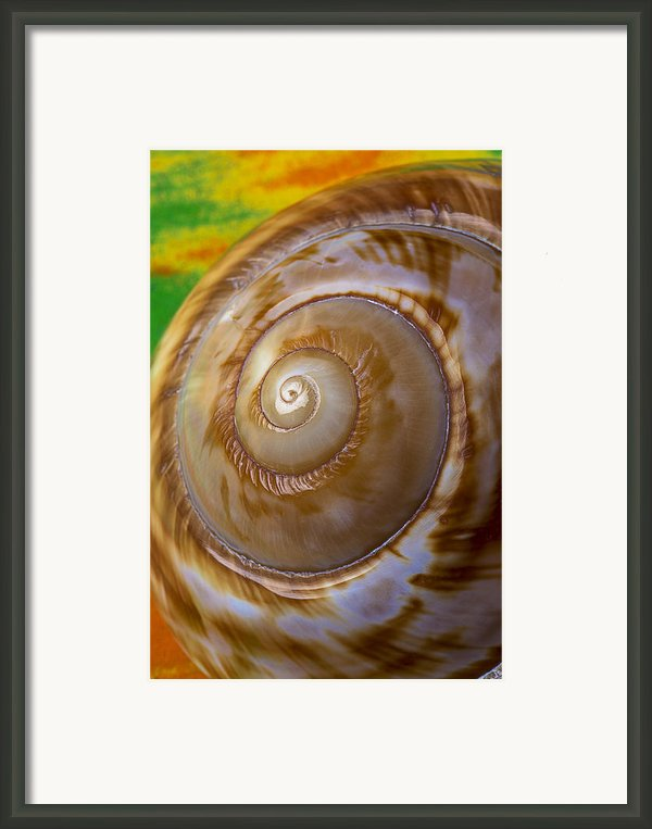 Shell Spiral Framed Print By Garry Gay