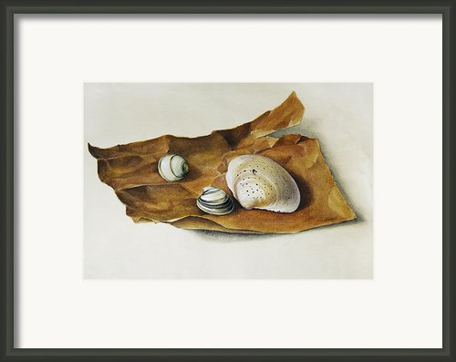 Shells On Paper Framed Print By Horst Braun