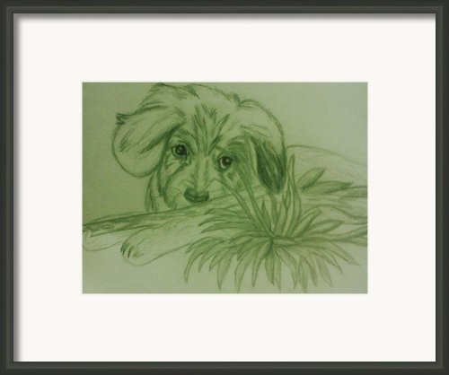 Shy Puppy Framed Print By Christy Brammer