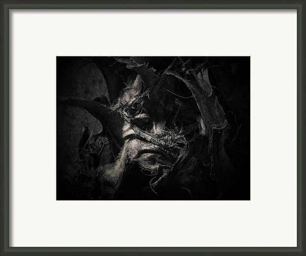 Sids Last Day Framed Print By David Fox