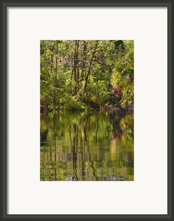 Silver Springs Nature Park Florida Framed Print By Christine Till