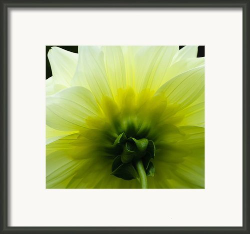 Simple Elegance Framed Print By Christi Kraft