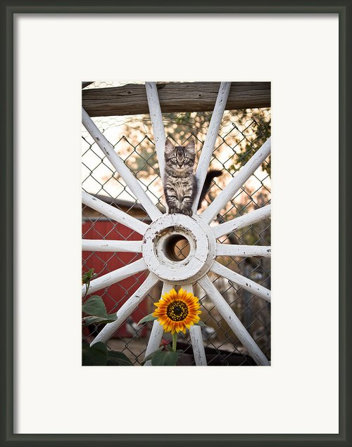 Simple Summer Framed Print By Diane Mintle