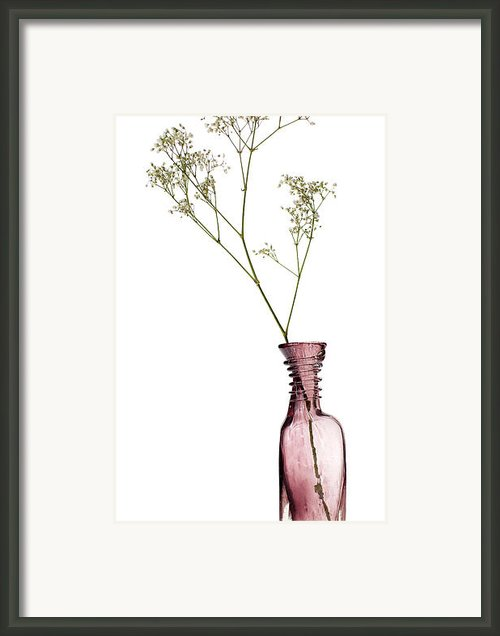 Simplicity Framed Print By David Bowman