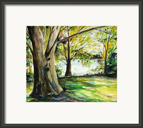 Singeltary Shade Framed Print By Scott Nelson