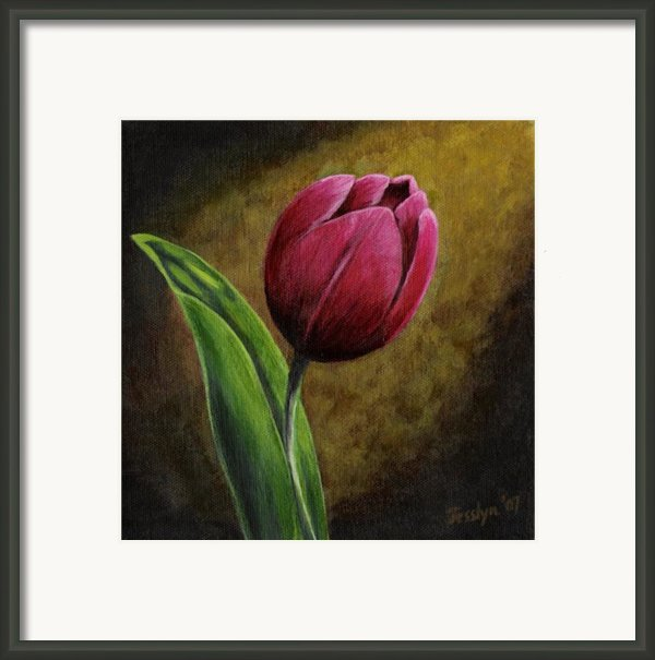 Single Tulip Framed Print By Jesslyn Fraser