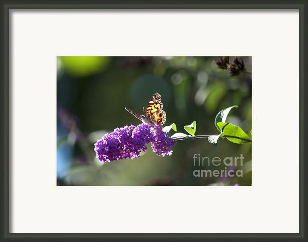 Sipping On Syrup Framed Print By Affini Woodley