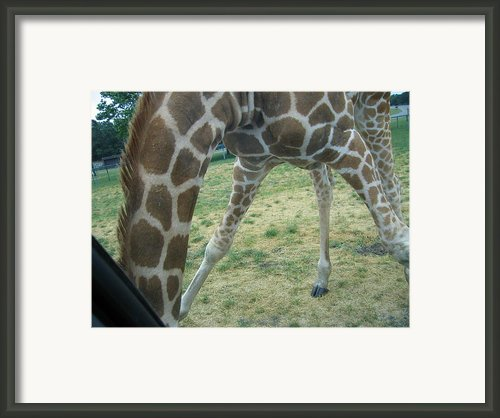 Six Flags Great Adventure - Animal Park - 121245 Framed Print By Dc Photographer