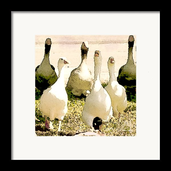 Six Geese And A Duck Framed Print By Artist And Photographer Laura Wrede