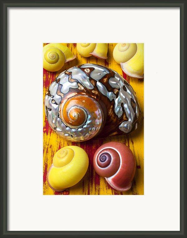 Six Snails Shells Framed Print By Garry Gay