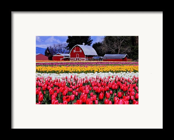 Skagit Valley Framed Print By Benjamin Yeager