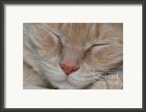 Sleeping Cat Face Closeup Framed Print By Amy Cicconi