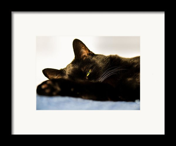 Sleeping With One Eye Open Framed Print By Bob Orsillo