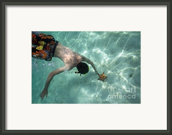 Snorkeller Touching Starfish On Seabed Framed Print By Sami Sarkis