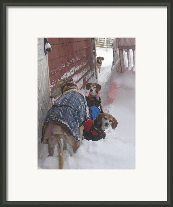 Snow Angels Framed Print By Leslie Manley