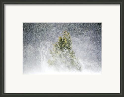 Snow Blown Framed Print By Emily Stauring