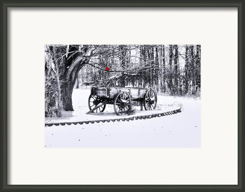 Snow Bound Framed Print By Mary Timman