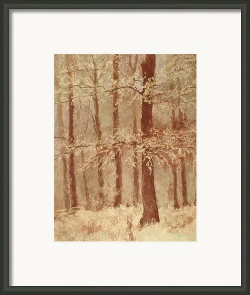 Snow Covered Tree Framed Print By Barbara Smeaton