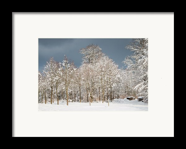 Snow Covered Trees In The Forest In Winter Framed Print By Matthias Hauser