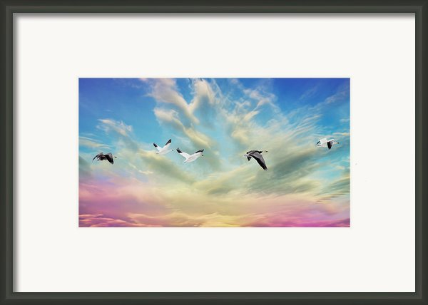 Snow Geese Over New Melle Framed Print By Bill Tiepelman