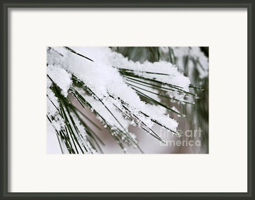 Snow On Pine Needles Framed Print By Elena Elisseeva