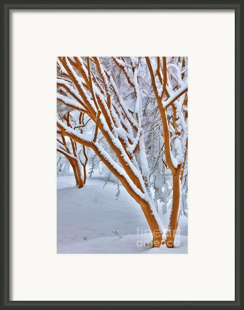 Snow Wonderful Snow - Greensboro North Carolina Framed Print By Dan Carmichael