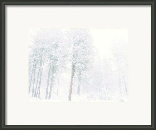 Snowed In Framed Print By Tara Turner