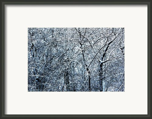 Snowed Trees 2 Framed Print By Xoanxo Cespon