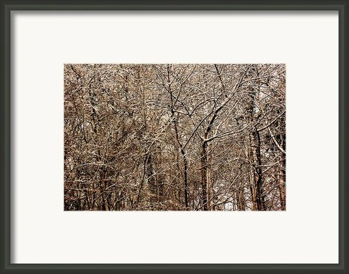 Snowed Trees Framed Print By Xoanxo Cespon