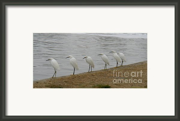 Snowy Egret Breakfast Club Framed Print By Bob And Jan Shriner